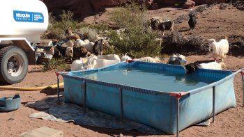 juntan agua en pelopinchos para que los chivos del norte no mueran de sed