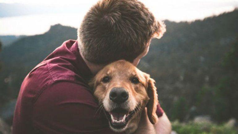 Día Mundial del Perro: por qué se celebra hoy y cuáles son los beneficios de tener uno