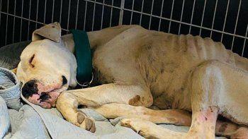 Rescataron en Fernández Oro a un perro que estaba a punto de morir de hambre