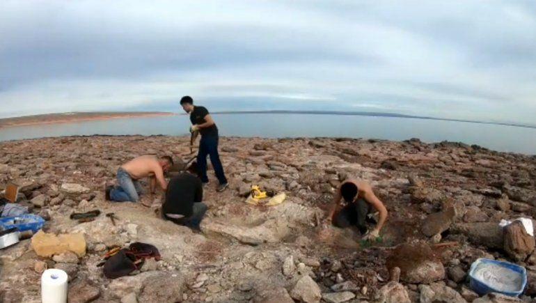 Hallaron los restos de un dino gigante en Los Barreales