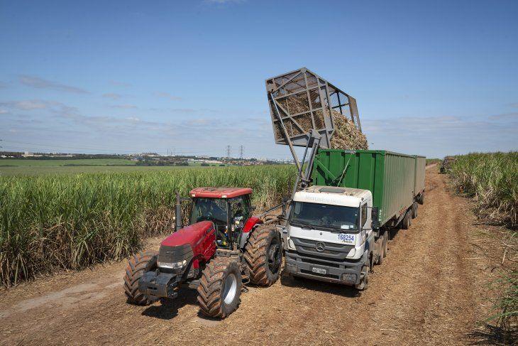 Una imagen sin fecha muestra los cultivos que se están recolectando para producir biocombustibles por el fabricante brasileño de azúcar y etanol Raizen