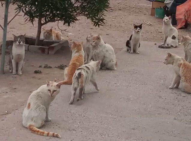 Buscan rescatar más de 40 gatos.