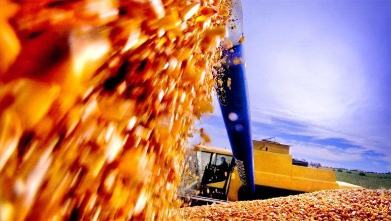 El gobierno eliminará las restricciones a la exportación del maíz