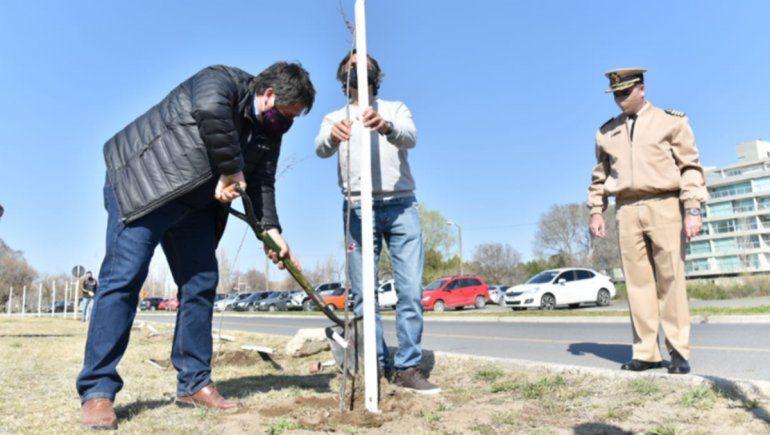 Ciudad: plantarán 300 árboles en barrios y parques públicos
