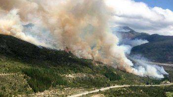El drama por los árboles exóticos en el incendio de El Bolsón