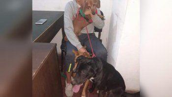 dictan una perimetral a un joven por maltratar a su perra