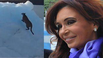 Un puma quedó atrapado en el glaciar y Cristina lo mostró en un video