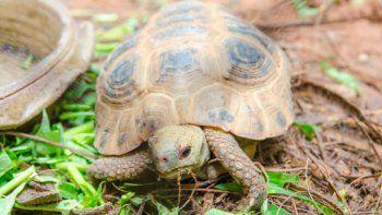 Soñar con tortugas: mirá qué significa
