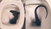 susto en la plata: fue al bano y encontro un lagarto en su inodoro