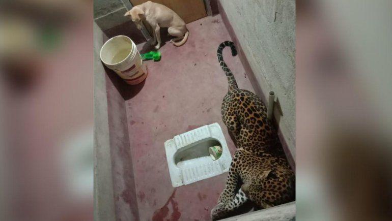 Un perro y un leopardo quedaron atrapados en un baño y el desenlace sorprendió en Twitter.