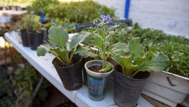 Medicinales y aromáticas, ¿por qué cultivarlas en casa?
