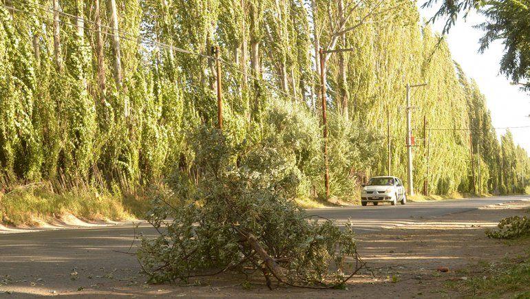 ¿Sigue el viento el fin de semana en el Alto Valle?