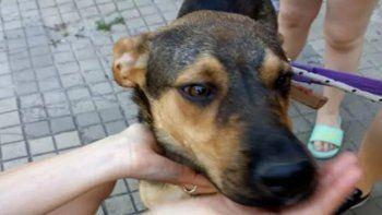 de terror: se mudaron y abandonaron a su perro sin agua ni comida cinco dias