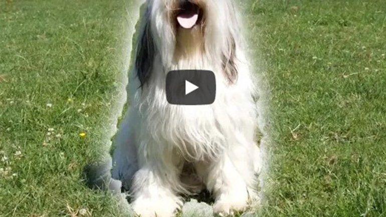 Este perrito no deja de sumar reproducciones en YouTube