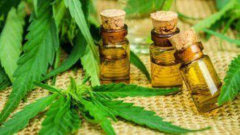 Cipolletti: otra vez roban plantas de cannabis medicinal