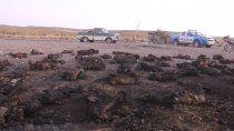 pelea entre vecinos termino con 62 chivas calcinadas y una casa quemada