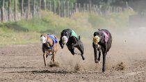 reves para organizadores de carreras de galgo: los quieren llevar a juicio
