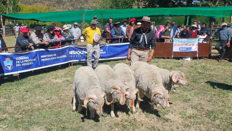 La feria de intercambio en Aluminé: más y mejor lana y carne