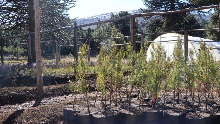 La Legislatura entrega 15 mil nuevos árboles a 14 municipios