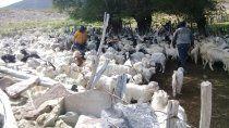 crianceros de villa nahueve: sigue sin resolverse el conflicto por las tierras