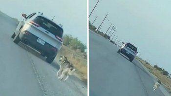 Viral: abandonó a un perro en la carretera y dos días después terminó preso.