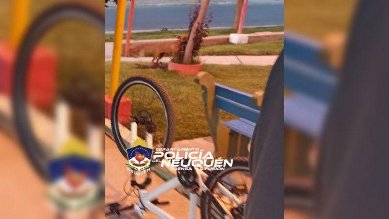 Vio su bicicleta en Face, avisó a la Policía y la recuperó
