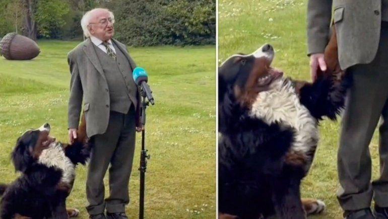 TikTok: perrito conquista a todos durante una entrevista