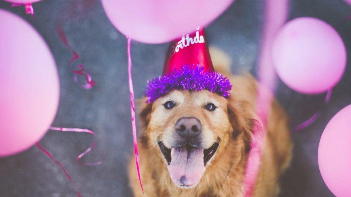TikTok: festejó el cumpleaños de su perro con un pastel de pollo horneado