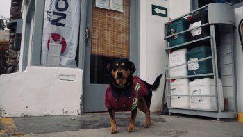 La historia del perro playero que conquista a los turistas en Piedra del Águila