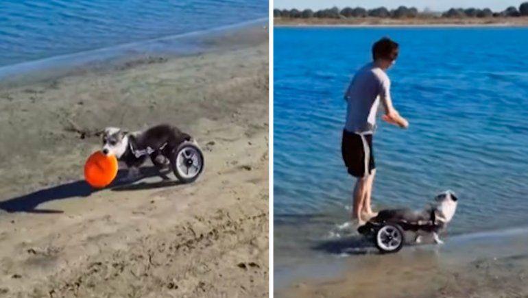 Viral: perrito con su silla de ruedas visita la playa por primera vez.