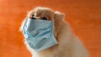 testearon a 100 mascotas para saber si se contagian de covid